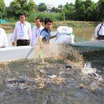 Tư vấn cách xử lý nước ao nuôi cá bị ô nhiễm chống chết hàng loạt