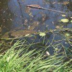 Đau đầu vấn đề xử lý nước thải từ các làng nghề