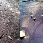 Ảnh hưởng của rác thải gây ô nhiễm nguồn nước sinh hoạt cho gia đình