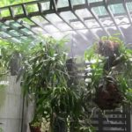 Chuyên thi công hệ thống tưới cây nhỏ giọt tại Cửa Lò, Nghệ An giá ưu đãi