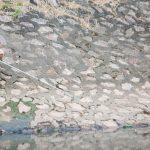 Thí điểm xử lý nước làm sạch sông Tô Lịch bằng công nghệ nhật có hiệu quả
