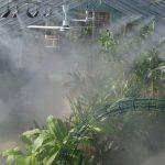 Dịch vụ lắp đặt hệ thống tưới phun sương tại Vinh, Nghệ An chuyên nghiệp
